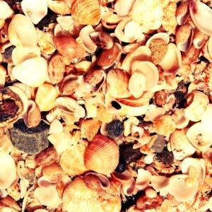 St Barts Beach Shells