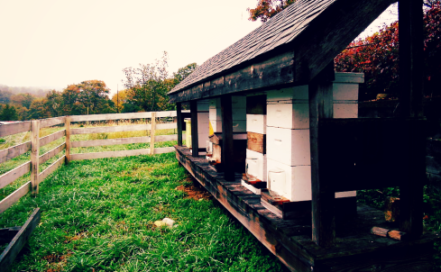 beehives1
